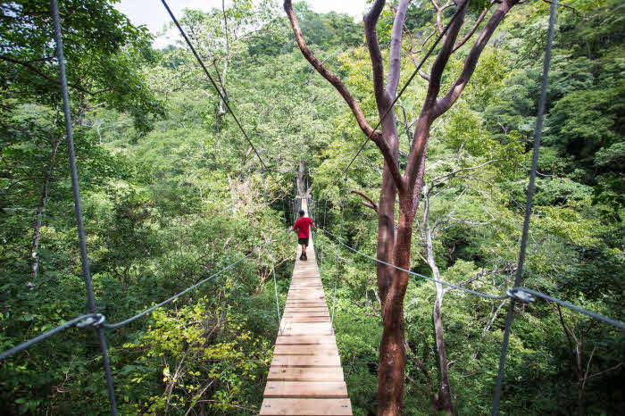 Ziplining Tour im Dschungel