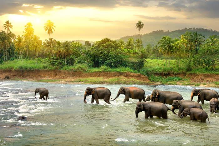 Elefanten Sri Lanka Nationalparks